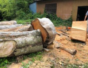 原木のケヤキです。